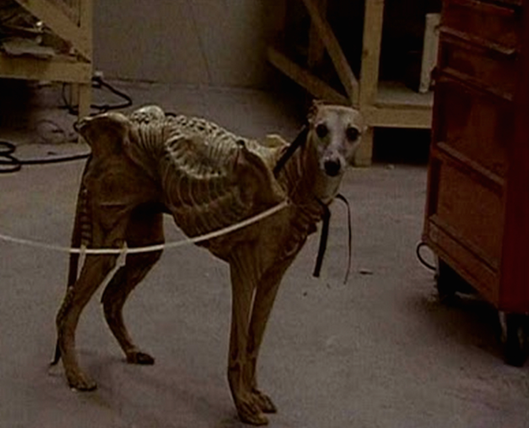 Xeno Pooch : Remembering The Time Alien 3 Tried To Use A ...