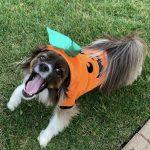 Yawning Pumpkin