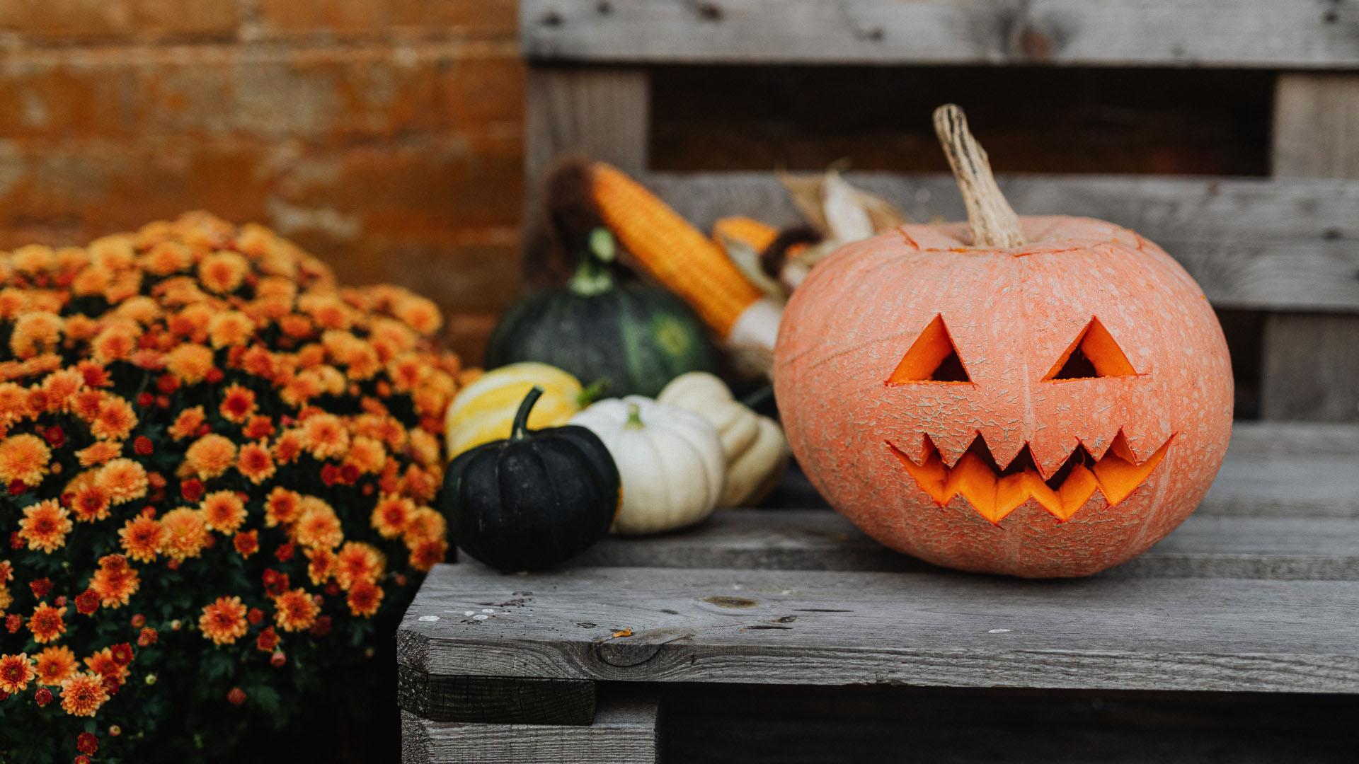 History of Halloween Pumpkin