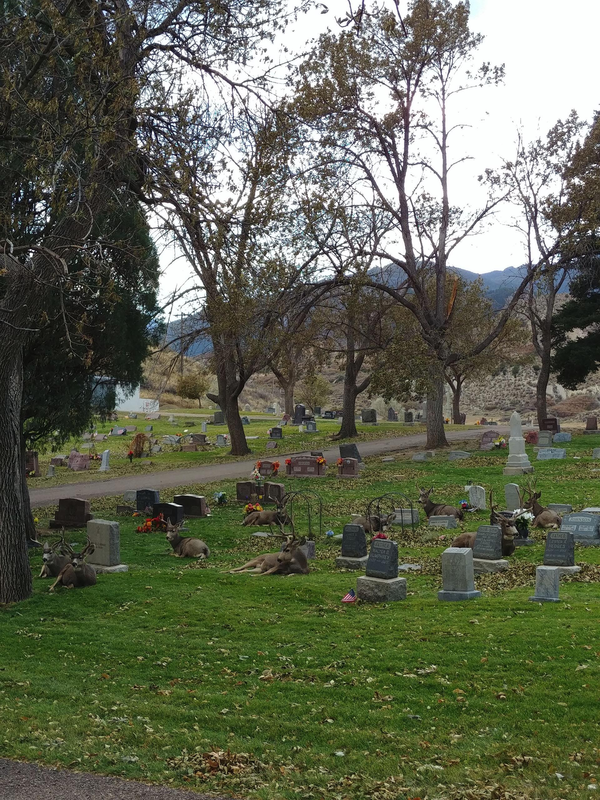 Cemetery Deer