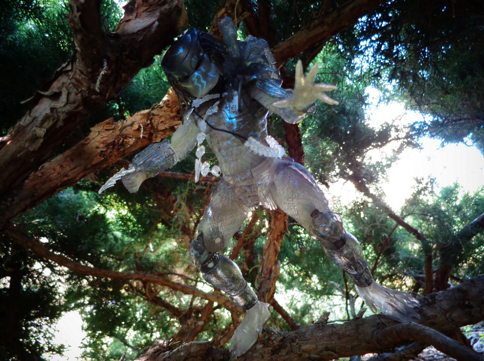 John Morey Predator