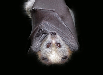 National Bat Day.