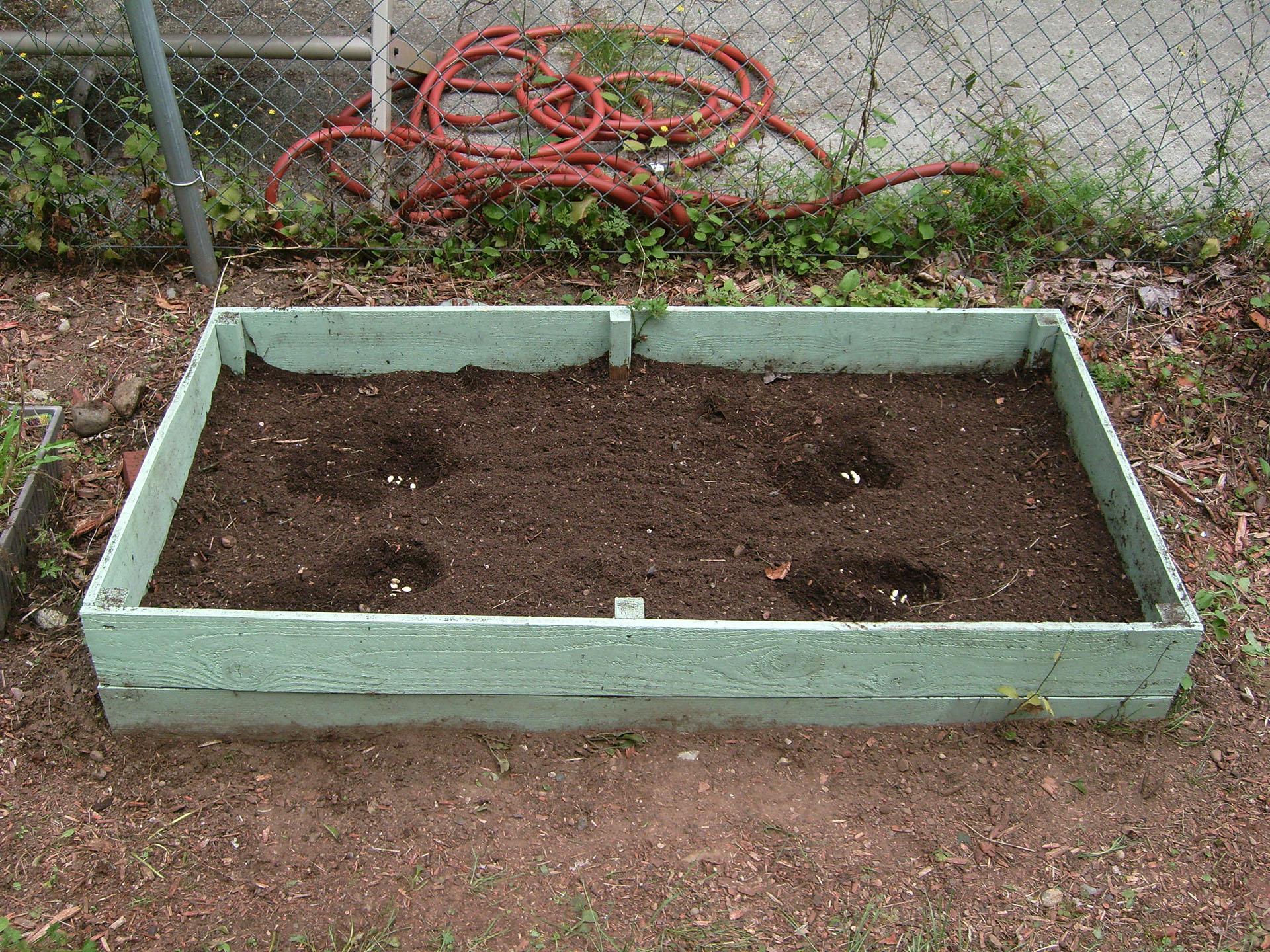 Pumpkin Log: Planting Seeds